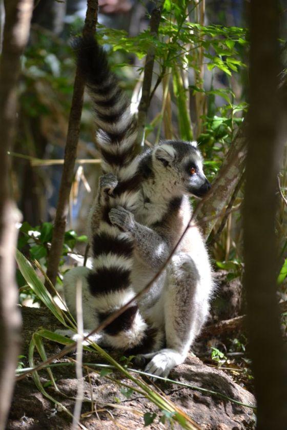 Madagascar Parco Anja2