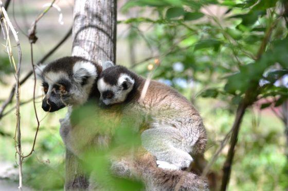 Madagascar Parco Anja3