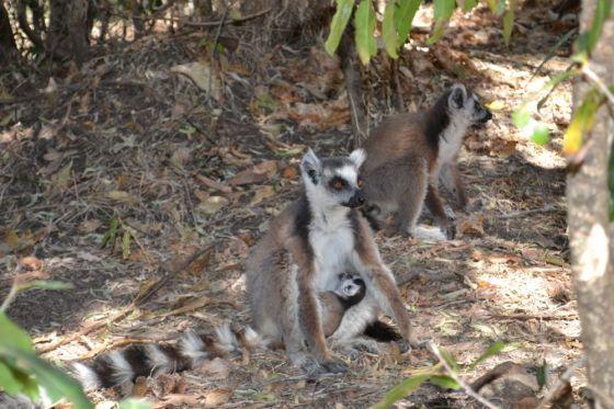 Madagascar Parco Isalo09