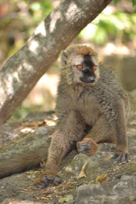 Madagascar Parco Isalo10