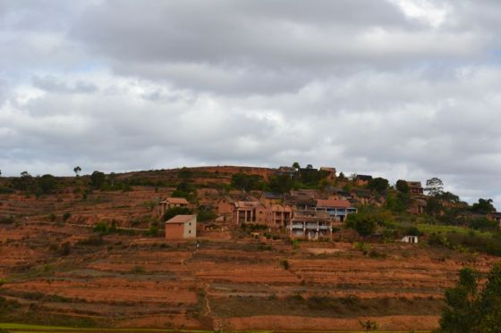 Madagascar RisaieSavana1